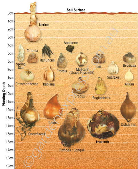 a comparison of two methods of producing flowers from spring bulbs Cut flower bulbs learn to grow flowering bulbs: pest and diseases of flowering bulbs, where to grow flowering bulbs, markets for flowering bulbs.