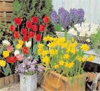 Pots2 - Garden Express Australia