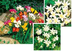 Warmer Climates 300 - Garden Express Australia