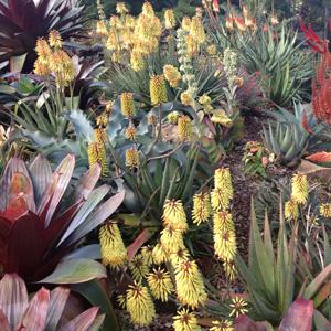 Aloe Sparkler Tm