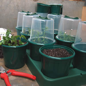 Aquamiser Home Propagating Kit
