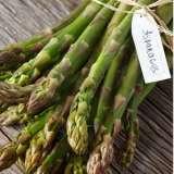 Asparagus_Mary_Washington_14