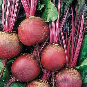 Seed – Beetroot Detroit Organic 275 Pkt