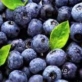 BLUEBERRY SUNSHINE BLUE ( EVERGREEN )***