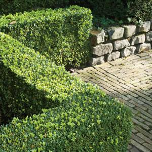 English Box Garden Express