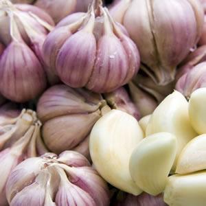 Garlic Purple Shutterstock 63204943 14 - Garden Express Australia
