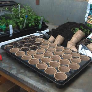 Jiffy Pots And Tray Set - Garden Express Australia