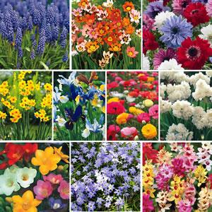 Landscape Bargain Collection – 400 Bulbs