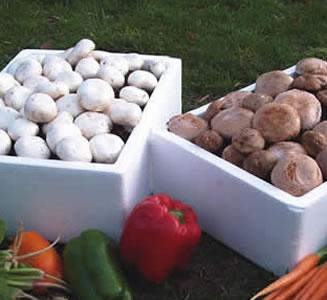 Mushroom Kit White/brown Combo