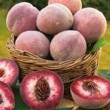 Peach-Blackboy-FM-14111333PA-15