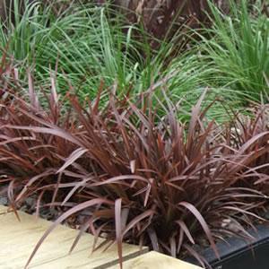 Shade Tolerant Grass Seed