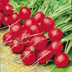 Seed – Radish Scarlet Globe 500 Pk
