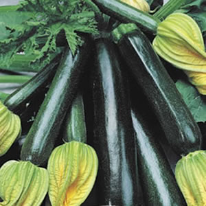 Seed – Zucchini Black Jack