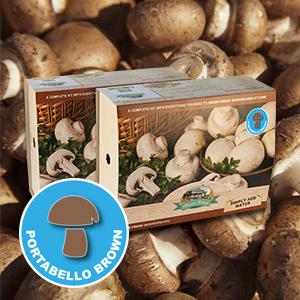 Mushroom Kit White