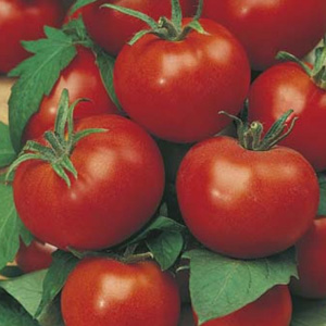 SEED – TOMATO GROSSE LISSE