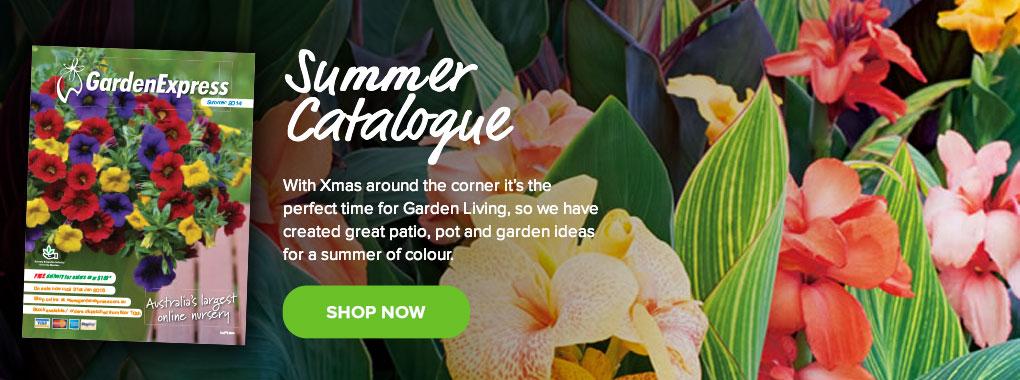 Summer Gardening Catalogue