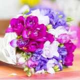 Freesia Romantic Blend 15