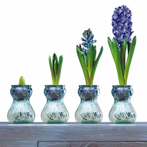 Hyacinth Vase Kit Blue