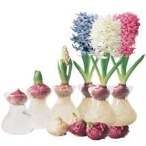 Hyacinth Vase Kit Set Of 3