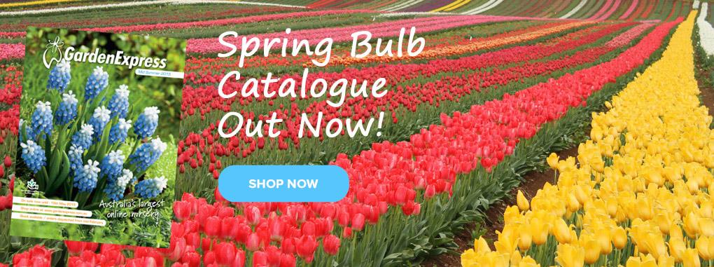 Spring Bulbs Catalogue