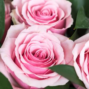 Rose The Childrens Rose