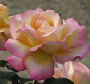 Vegetable And Flower Garden Ideas