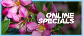 Online Specials