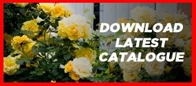 download-current-catalogue