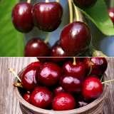 2-Way-Cherry-split-15