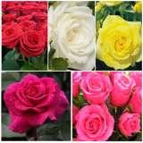 Lucky Dip Rose Offer – 10 Roses