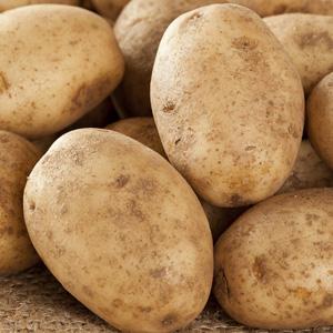 Potato Russet Burbank St 116118913 15