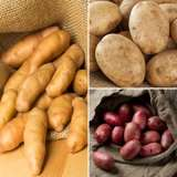 Potato_Winter_Collection_1_15