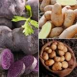 Potato_Winter_Collection_2_15