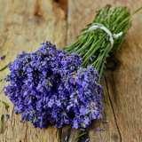 Lavender Pacific Blue St 197740802 15
