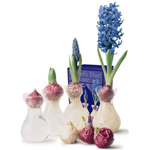 Hyacinth Vase Kit Woodstock