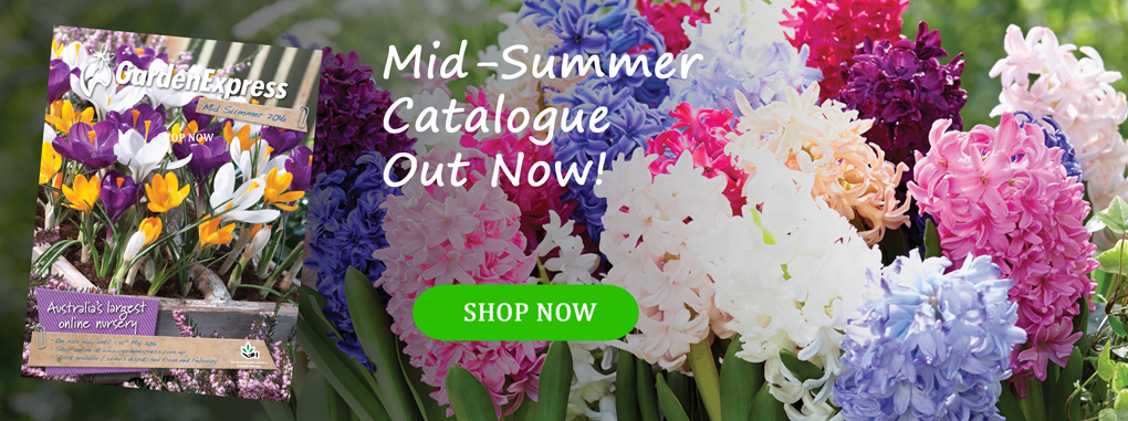 Mid-Summer2016-HomePage