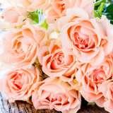 Standard Rose – Apricot Nectar