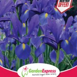 Ge Value Pack Dutch Iris Dark Blue 300x214