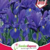 GE-Value-Pack--Dutch-Iris-Dark-Blue-300x214
