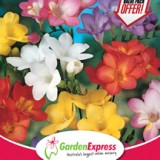 GE-Value-Pack--Freesia-Hadeco-Mixed-300x216