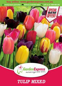 Ge Value Pack Tulip Mixed 300x214