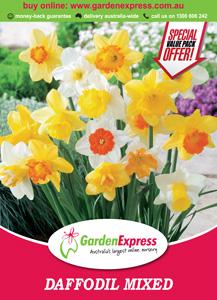 Ge Valuep Ack Daffodil Mixed 300x2141 - Garden Express Australia