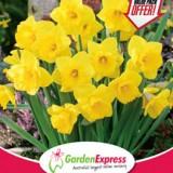 GE-ValuePack-Daffodil-Yellow-Trumpet-300x2141