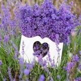 Lavender Hidcote Carlisle