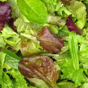 Seed – Mesclun Gourmet Salad