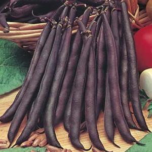 Seed – Climbing Bean Purple King