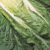 lettuce-green-cos1250-pk-16