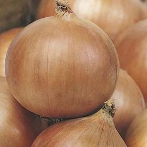 Seed – Onion Hunter River Brown