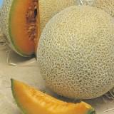 Seed – Rock Melon Hales Best