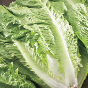 SEED – LETTUCE GREEN COS